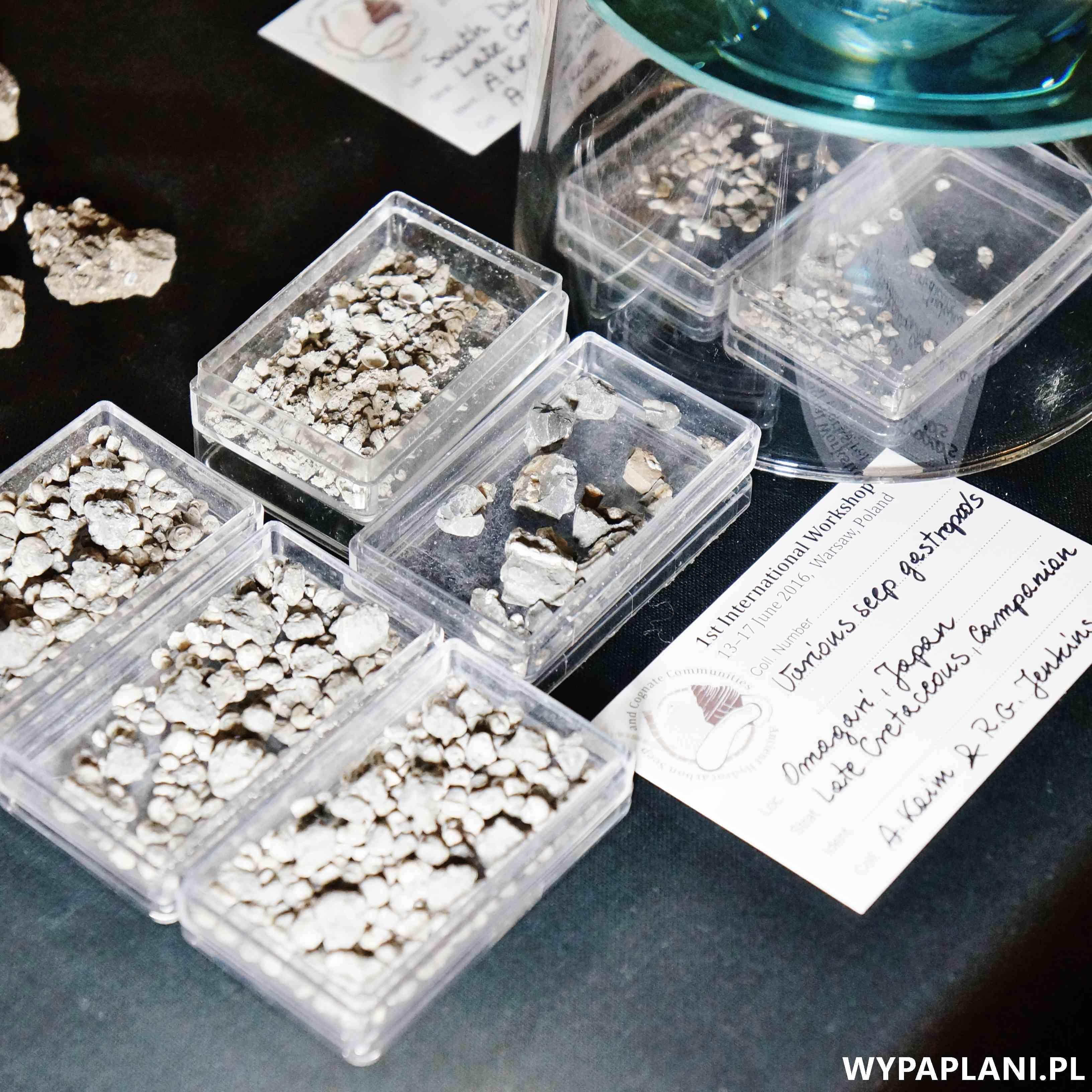 dsc00585_muzeum-ewolucji-warszawa