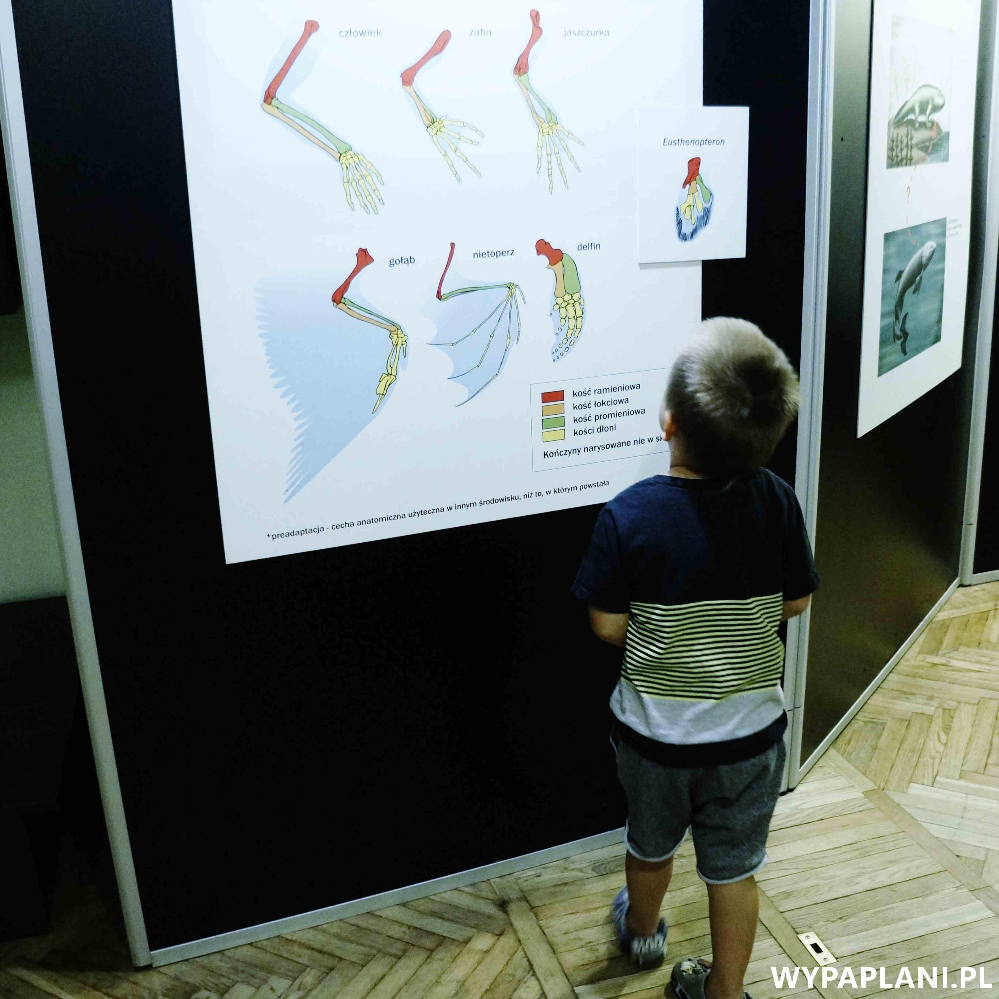 dsc00588_muzeum-ewolucji-warszawa