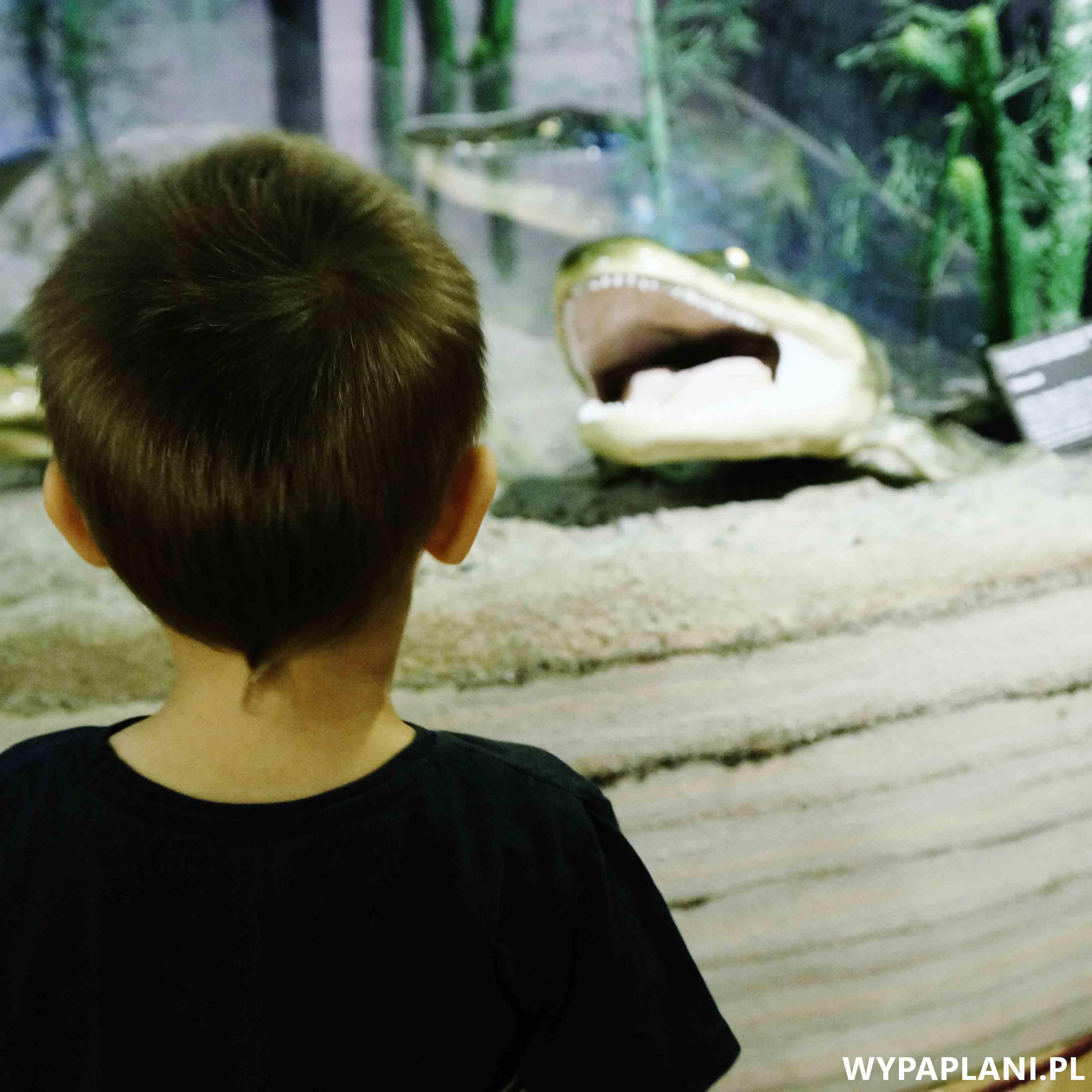dsc00589_muzeum-ewolucji-warszawa