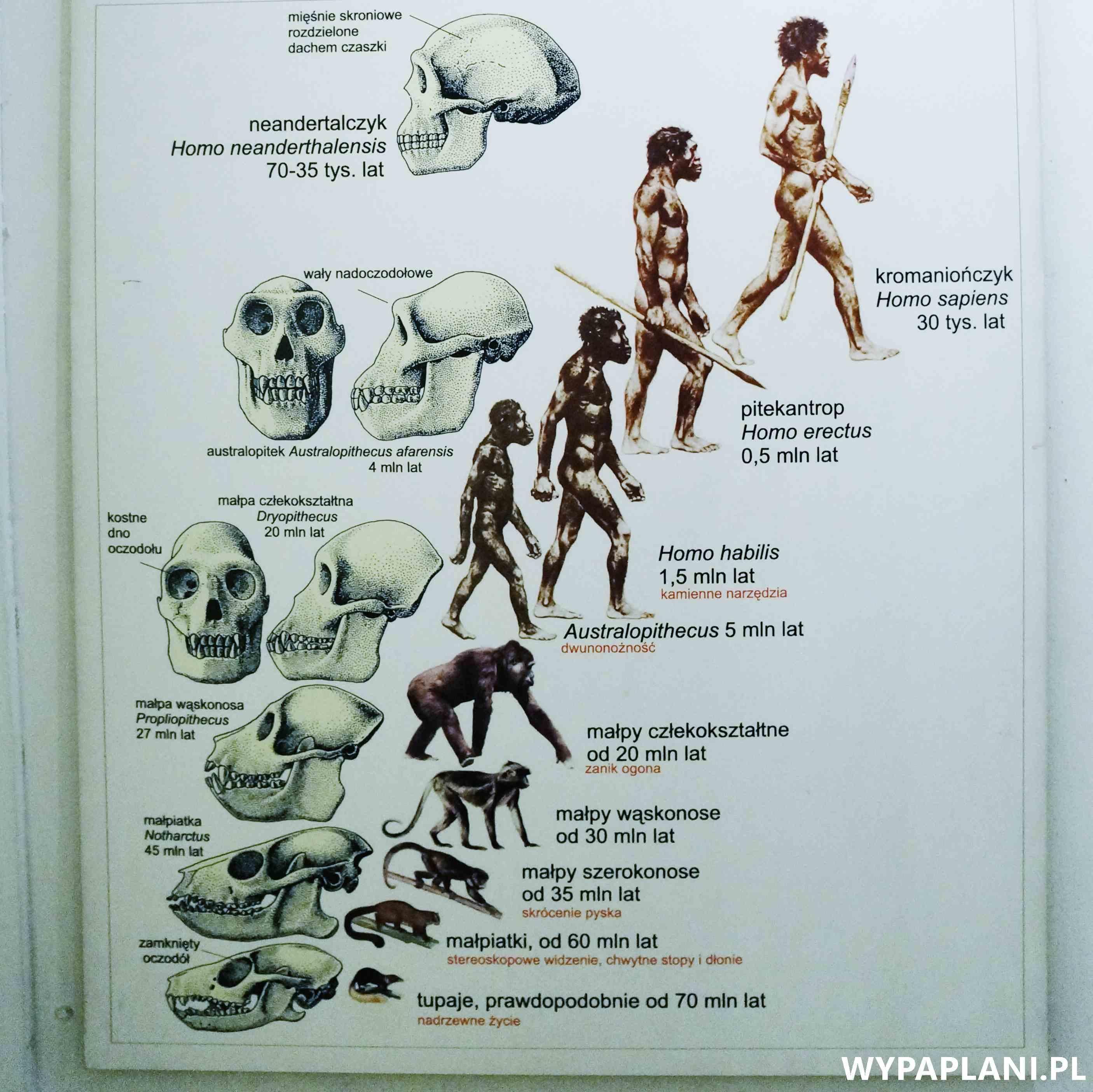 dsc00600_muzeum-ewolucji-warszawa