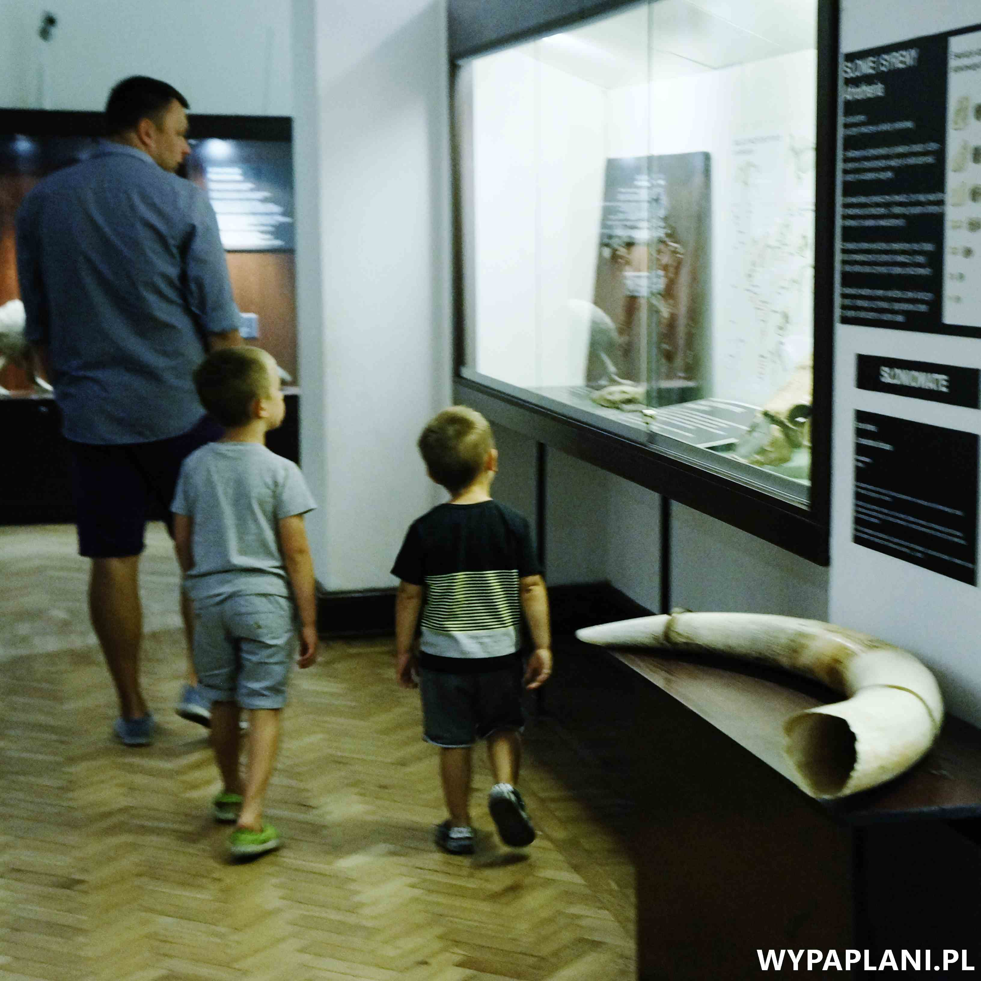 dsc00601_muzeum-ewolucji-warszawa