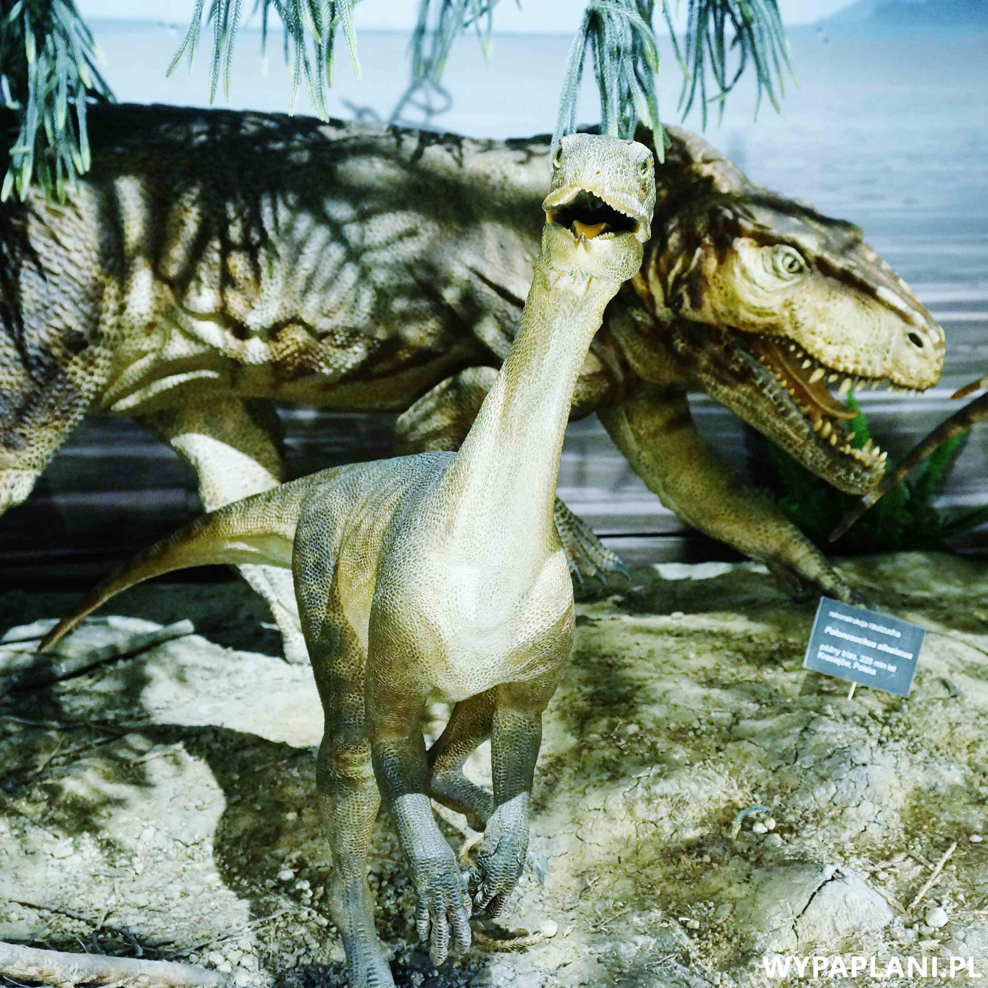 dsc00605_muzeum-ewolucji-warszawa